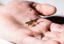 Il primo insetto robot volante senza fili