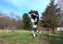 Sarà bellissimo quando questo grosso robot ci correrà incontro (no)