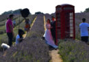 Le cabine telefoniche britanniche, senza telefoni