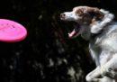 Il miglior frisbee per una domenica all'aperto