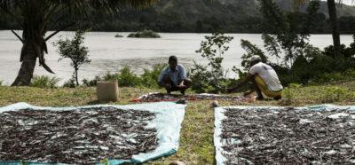 In Madagascar ci si ammazza per la vaniglia