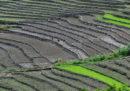 Lo stato indiano che ha eliminato i pesticidi