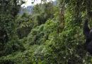 Il parco nazionale dei Virunga, nella Repubblica Democratica del Congo, rimarrà chiuso ai turisti fino al 2019 per motivi di sicurezza