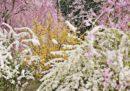 Fotografi in giardino