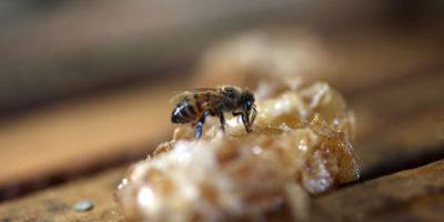 Le api comprendono il concetto di zero?