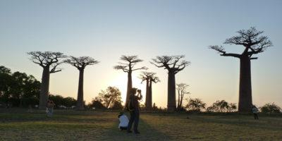 C'è una strana moria di baobab in Africa