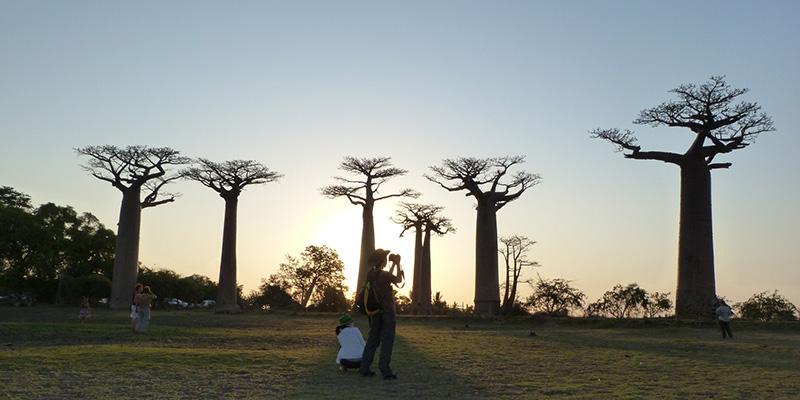 Definizione di albero di datazione