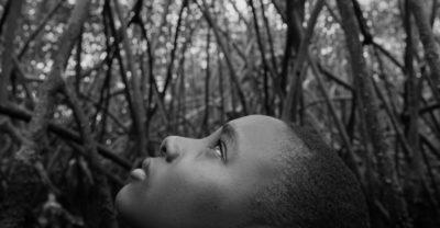 I signori delle mangrovie