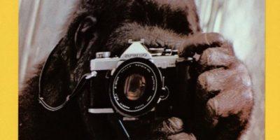 Addio a Koko, la gorilla che conosceva la lingua dei segni