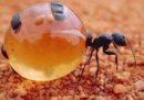 La cosa più buona mangiata dallo chef del Noma l'anno scorso è stata una formica 🐜