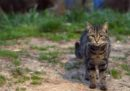 A Washington è cominciato un censimento dei gatti