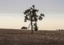 L'enorme problema della siccità nel Nuovo Galles del Sud