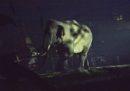 Per colpa nostra molti animali stanno diventando più notturni