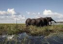 Gli elefanti uccisi dai bracconieri in Botswana