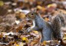 Equinozio d'autunno: cos'è e perché era proprio oggi