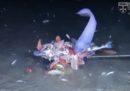 """Abbiamo scoperto tre nuove specie di """"pesci lumaca"""""""