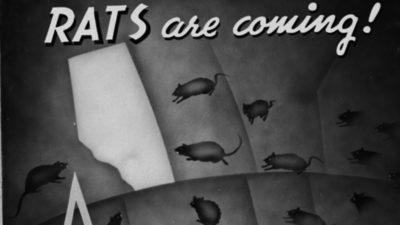 L'unico posto al mondo senza ratti