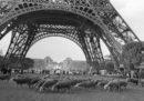 Al pascolo sotto la Torre Eiffel