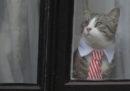 L'Ecuador ha sgridato Julian Assange per come cura il suo gatto