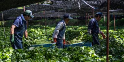 Il Giappone sta cambiando idea sull'immigrazione?