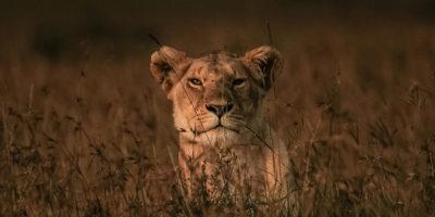 Il riconoscimento facciale degli animali