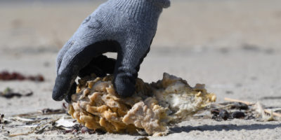 L'Europa vuole vietare la plastica usa e getta