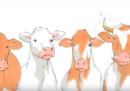 In Svizzera si voterà per tenere le corna alle vacche e alle capre