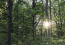 Quelli che vivono nei boschi