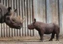 La Cina ha ripristinato temporaneamente il divieto di commerciare in prodotti legati alla caccia di tigri e rinoceronti