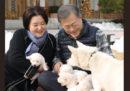 Sono nati i cuccioli dei cani regalati da Kim Jong-un alla Corea del Sud