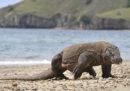 L'Indonesia ha cancellato il piano per chiudere l'isola di Komodo ai turisti per un anno