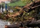 Due persone sono morte a Lillianes, in Valle d'Aosta, schiacciate da una pianta caduta sulla loro auto