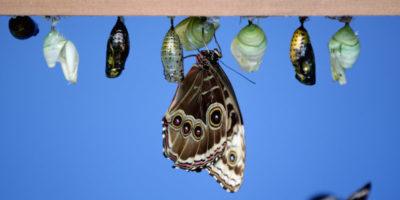 Tempi duri per gli insetti