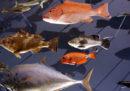 A New York stanno spostando 3 milioni di pesci morti