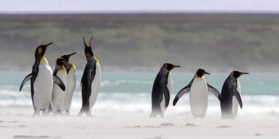 Brexit è un problema anche per i pinguini?