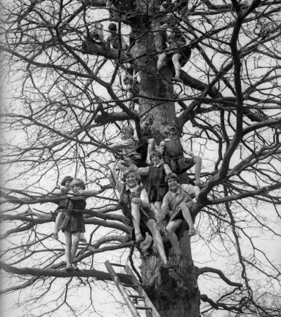 Scuola sugli alberi