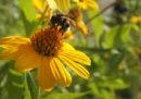 Le piante ascoltano, coi fiori