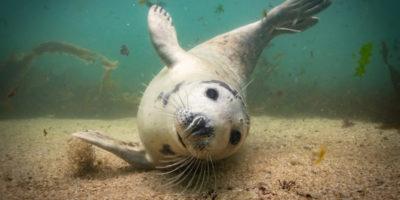 Grandi foto scattate sott'acqua