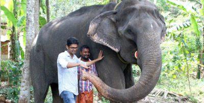 È morto l'elefante più vecchio del mondo