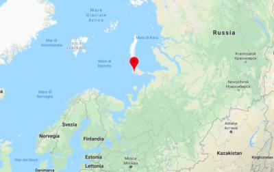 Invasione di orsi polari in Russia, colpa del cambiamento climatico