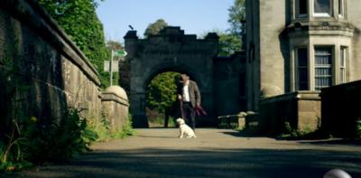 Il ponte dei cani suicidi