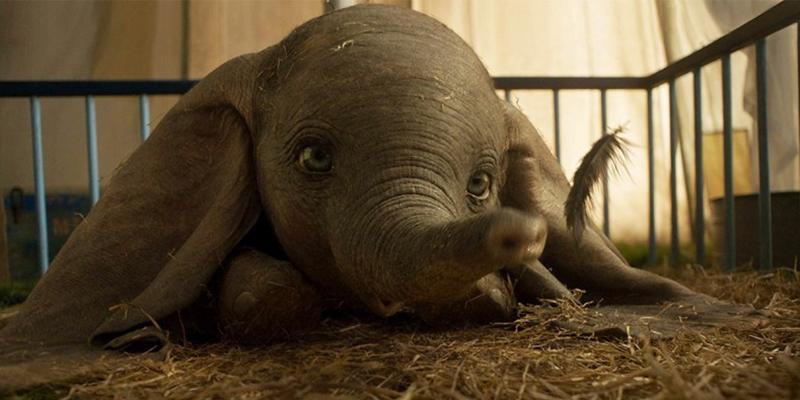 Risultati immagini per Dumbo
