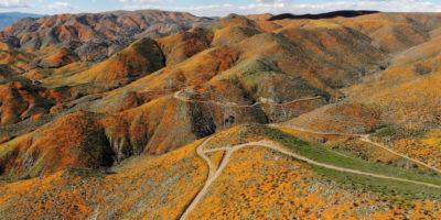 Fioriture straordinarie in California