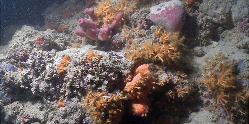 Puglia, scoperta la prima barriera corallina in Italia