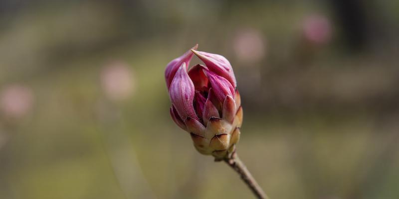 L'equinozio di primavera è oggi