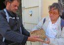 L'archeologo e assessore regionale siciliano Sebastiano Tusa era sull'aereo precipitato in Etiopia