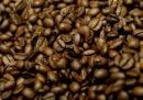 Il governo svizzero vuole smettere di avere scorte di emergenza di caffè