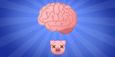 L'esperimento che ha riportato in vita i cervelli di alcuni maiali morti