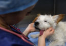 Da oggi è obbligatoria la ricetta veterinaria elettronica