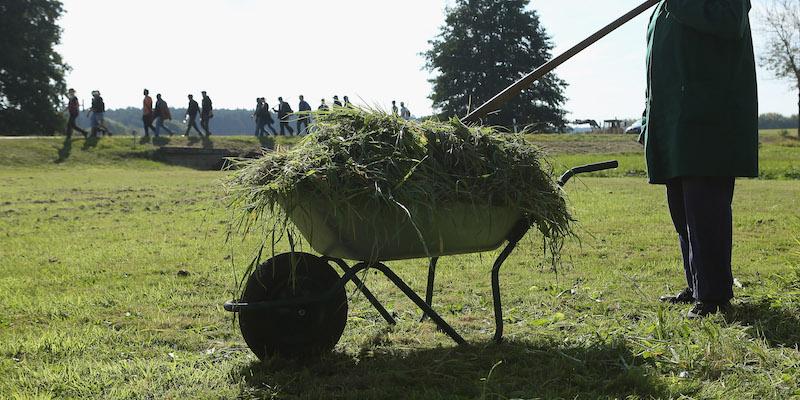 Perché l'erba tagliata ha quel forte odore